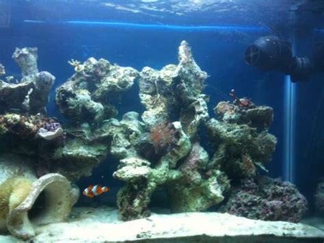 aquascape live rock reef sanctuary