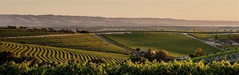 mclaren vale history evolution and revolution in