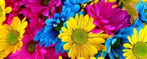 colori dei fiori energia ed emozioni dai colori dei fiori scelte per te