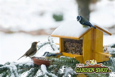 bird food getting more and more popular howtogarden ie