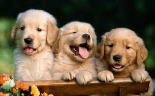 Cute Dog Wallpapers by Cute Dog Wallpapers Wallpaper Cave