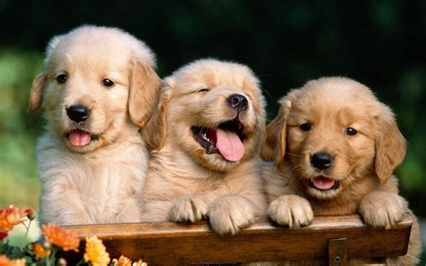 cute dog wallpapers for windows cute dog wallpapers wallpaper cave