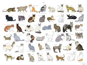 types of cat coloring cat breeds poster 18x24