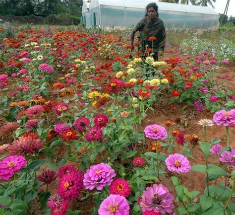Garden State Flowers Garden State Flower Market Garden State Flower Market Freehold Nj 07728 732 431 9000 Lovely