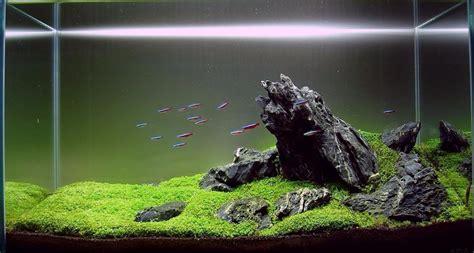 roca para acuarios plantados paisajismo iwagumi bs 450