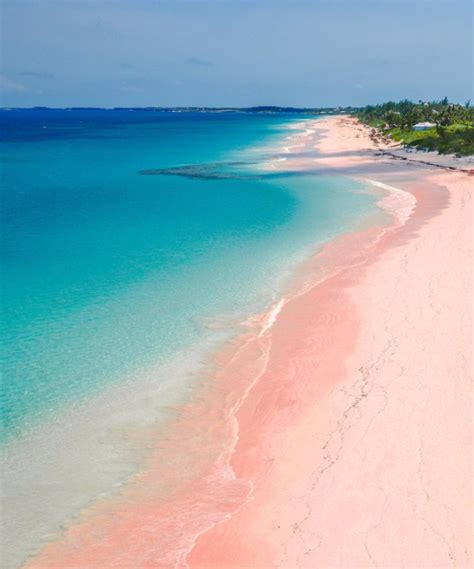 beaches with pink sand best 25 pink island ideas on pink sand