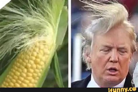 donald trump vs corn the corn husk