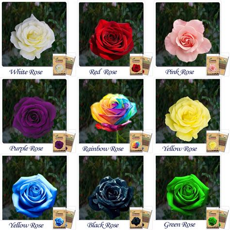 Order Roses by Popular Order Rainbow Roses Buy Cheap Order Rainbow Roses