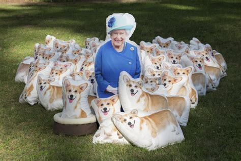 how many corgis does the queen have 90 corgi pillows are posed in photos to honor queen