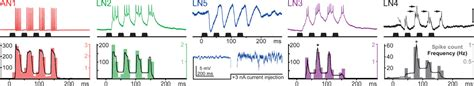 auditory pattern recognition activities an auditory feature detection circuit for sound pattern