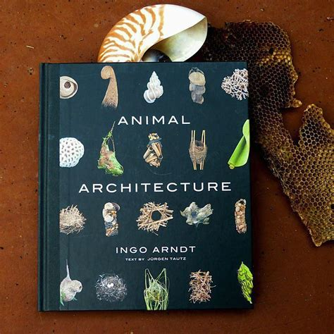 animal architecture an awesome new photo book about the structures critters create boing boing animal architecture magnificent structures built