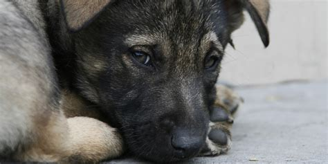 sad puppies animal abuse registry created to track convicted offenders huffpost
