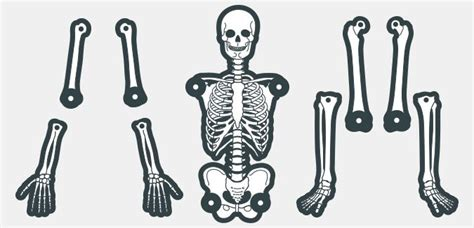 skeleton template to cut out create your own skeleton paperzip