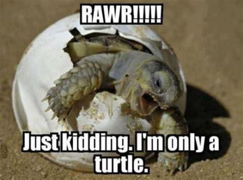 Funny Turtle Memes - animal animal animal march 2013