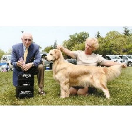 golden retriever breeders toronto area bichon breed frise bichon breeders frise ontario bichon breeds picture