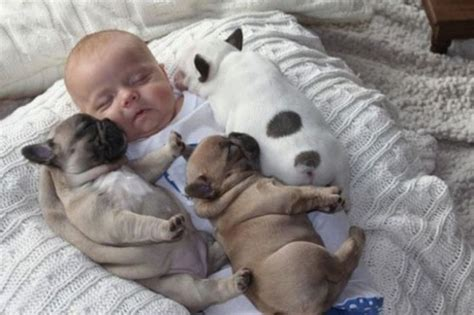 babies with puppies babies with puppies great inspire