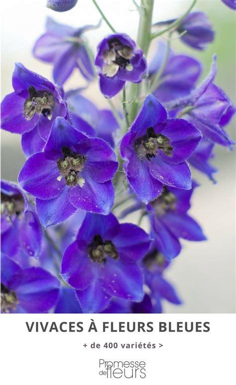 Fleurs Bleues Vivaces by Les Plantes Vivaces 224 Fleurs Bleues 233 Voquent Le Calme La