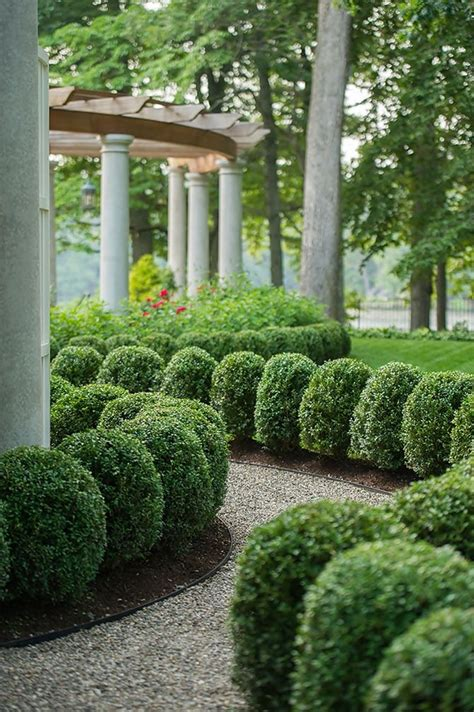 Hedging Ideas For Gardens 36 Best Boxwoods In The Garden Images On