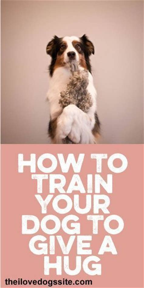 how to discipline puppy how to your to give a hug dogtraining pet