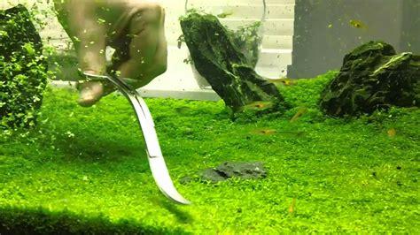 Lu T5 Untuk Aquascape Hemianthus Carpet Trimming