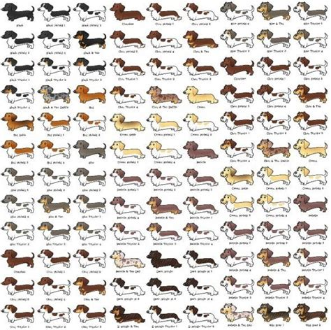 dog color pattern names 12 facts dachshund lovers know by heart rover com
