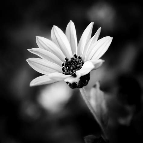 beautiful examples  black  white pictures