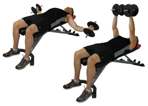 bench flyes fit for life dumbbell flys