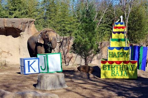 does lincoln park zoo elephants save money and the at 5 free zoos drive the