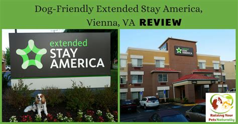 friendly hotels washington dc pet friendly hotels in washington dc area vienna virginia friendly hotel review