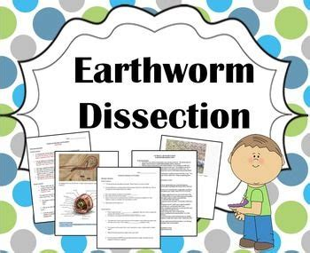 earthworm dissection guide middle school 17 best images about sciences on science