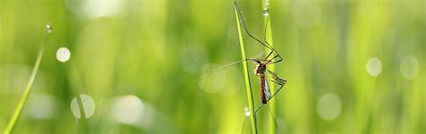 Kleine Mücken In Der Wohnung by Fliegen Und M 195 188 Ckenbek 195 164 Mpfung F 195 188 R Frankfurt Preventa