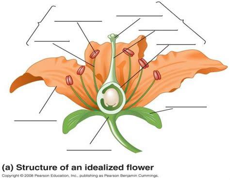 diagram of flowers flower diagram purposegames