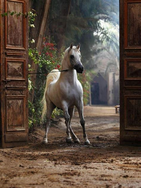 16 Gorgeous Pictures Of Horses by 362 Best S Images On Horses Animal