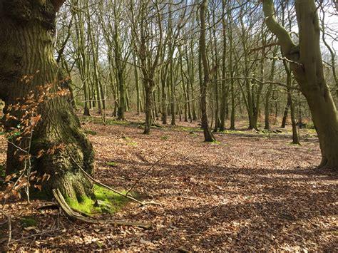 ord wood oughtibridge  sheffield yorkshire