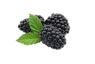 are raspberries bad for dogs 3 types of berries dogs can eat naturipe farms berries
