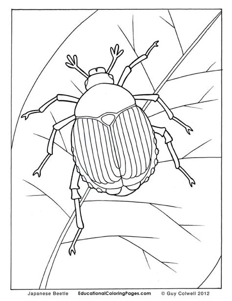 japanese beetle coloring page animals printable coloring pages animal coloring pages