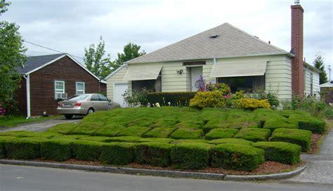 shrubs for front of house bushes shrubs front house good shrub cut bad lentine