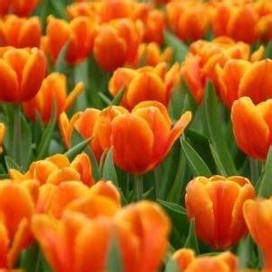 fiori arancioni nomi pin fiori arancioni on