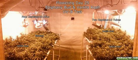 uvb light for plants does uv enhance thc output 420 magazine