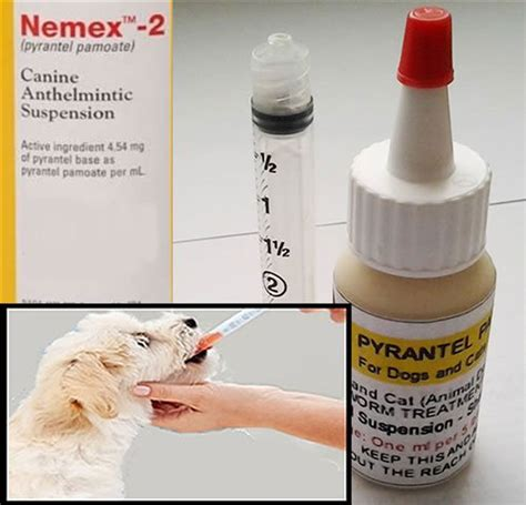 pyrantel pamoate dosage for puppies pyrantel pamoate suspension deworming for cats and dogs