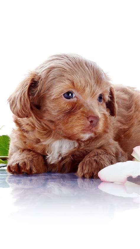 Süße Baby Tiere 5015 by Die 85 Besten Tierbabys Hintergrundbilder
