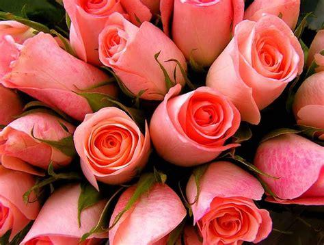 imagenes de rosas jpg im 225 genes de rosas rosas hermosas por definici 243 n