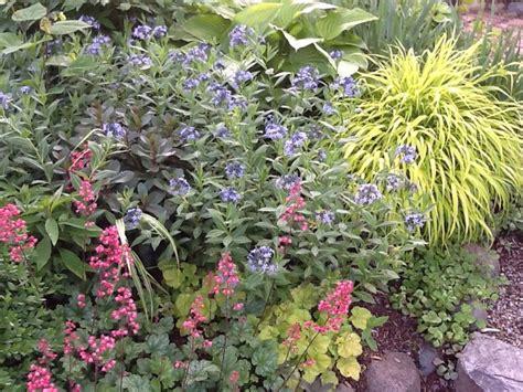 pin by juliana cerra on landscape perennials favorites for michigan pinterest
