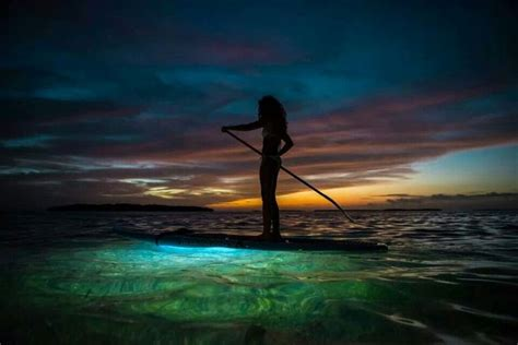 ops paddle board lights 28 best nocqua adventure gear images on