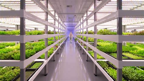 growing   vertical farming works  bm youtube