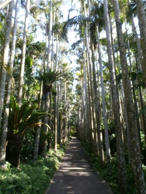 Southeast Botanical Gardens An Okinawa Dragonfly Picture Of Southeast Botanical Gardens Okinawa Tripadvisor
