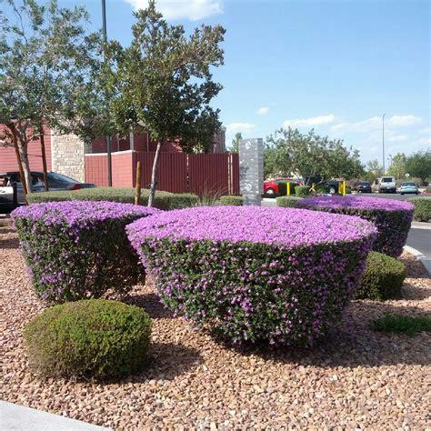 flowering garden shrubs flowering shrubs garden wendys hat