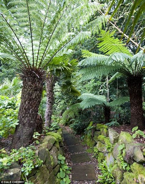 the best ideas about tree ferns garden fern gardens and