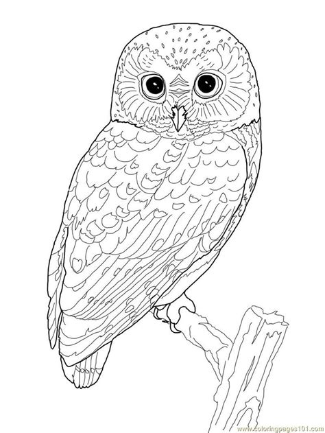 printable owl free printable owl coloring page coloring pages owl birds
