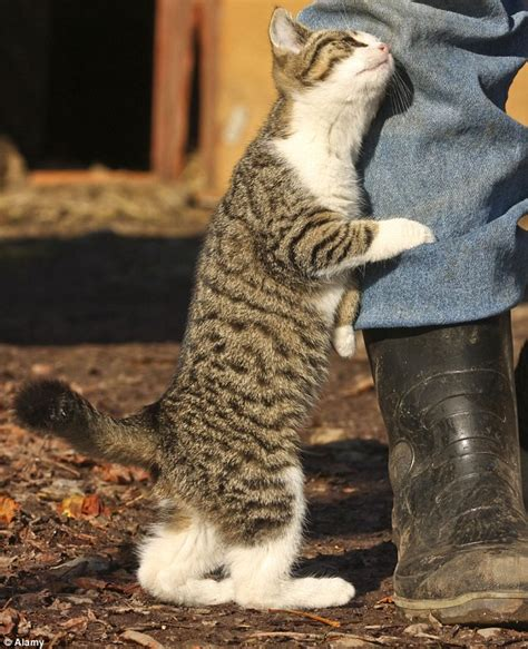 the truth behind your cat s behavior is weirder than you think